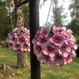Solcellsdekoration Hortensia rosa