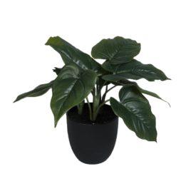 Konstväxt Philodendron i kruka 35cm